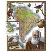 Steven Noble - Books, Botanical, Engraving, Historical, Maps, Maps/Charts, Marine, Nautical, Scratch Board, Travel, Woodcut