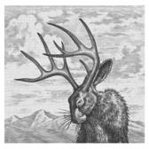 Steven Noble - Animals, Black & White, Cross Hatch, Engraving, Etching, Humor, Line & Wash, Linoleum, Nature, Packaging, Scratch Board, Woodcut